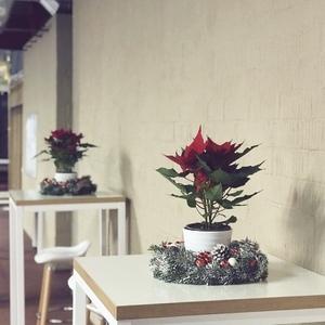 Новогодние венки из живой пихты с рождественской звездой внутри