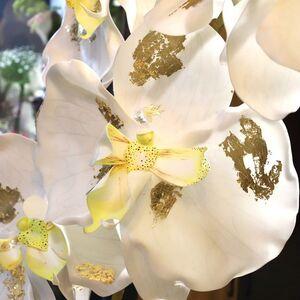 Ростовая орхидея